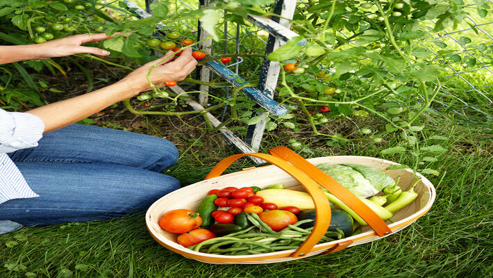 Steps To Know Before Creating a Kitchen Garden